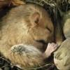 Pourquoi certains animaux hibernent-ils ?