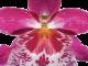 La fleur vue en détail