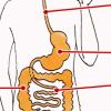 La digestion, un vrai parcours d'aventurier