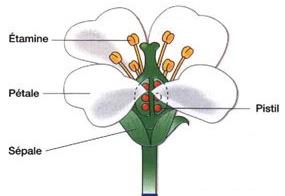 La fleurs