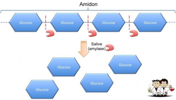 Amidon amylase