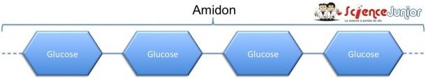 Amidon schema