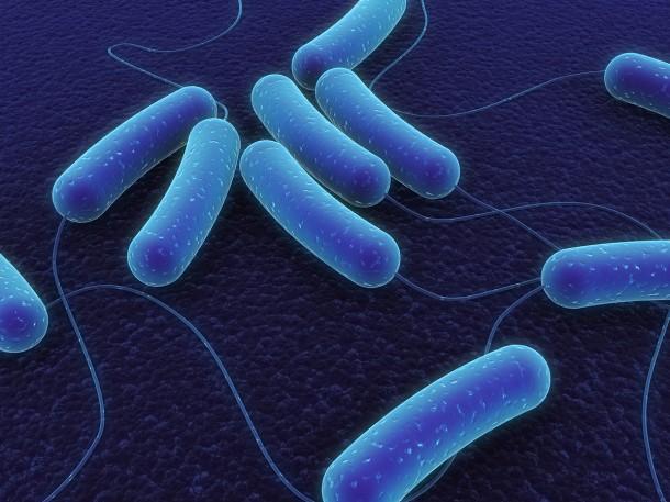 Des bactéries dans l'eau