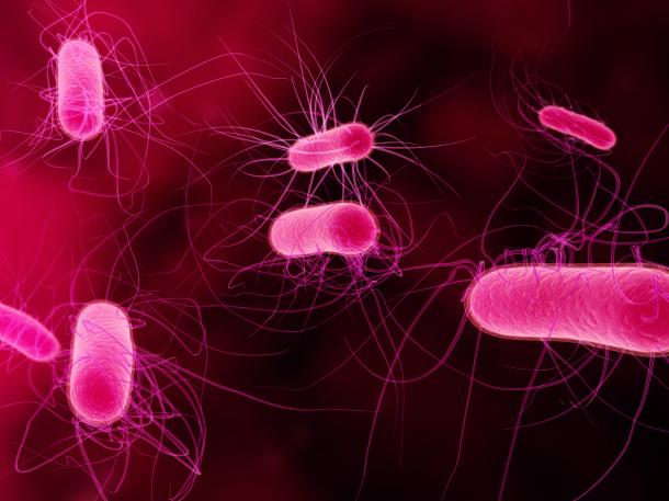 Représentation 3D de bactéries