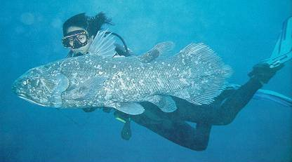 Un coelacanthe et une plongeuse