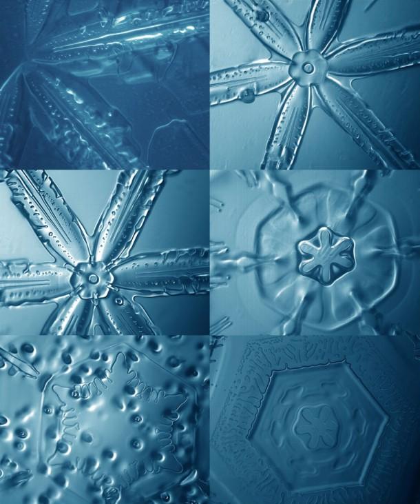 Des flocons de neige vus au microscope