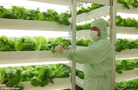Les productions végétales du futur