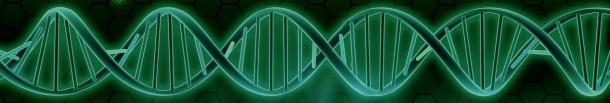 Molécule d'ADN en 3D