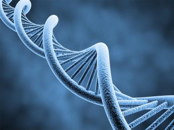 Molécule d'ADN