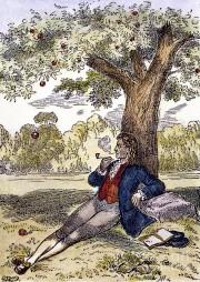 Newton sous le pommier